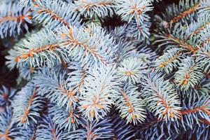 sfondo albero di natale.