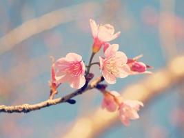 toni pastello fiori di ciliegio primaverili con effetto filtro retrò