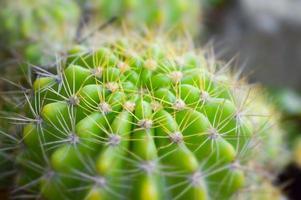 vicino albero di cactus