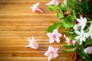 bellissimi fiori rosa weigel foto