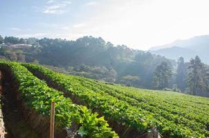 passi fattoria di fragole.