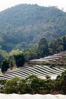 terreno agricolo vegetale foto