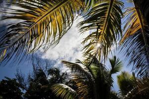 foglie di palma