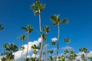 cielo tropicale con palme da cocco foto