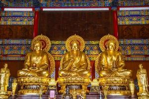 statue di Buddha