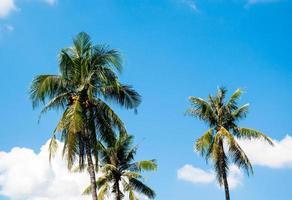 albero di cocco sul cielo blu e nuvola bianca