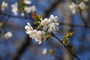 fiore di primavera con cielo blu sullo sfondo foto
