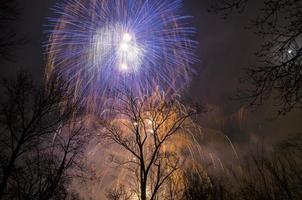 fuochi d'artificio nel cielo sopra gli alberi foto