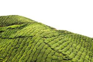contorno di una piantagione di tè dell'altopiano con cielo isolato foto