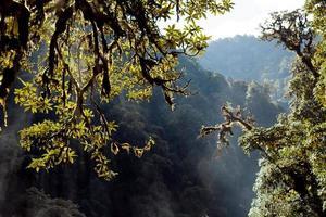 alberi sullo sfondo con la foresta pluviale himalaya montagna nepal foto