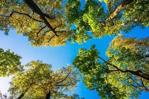 la corona degli alberi d'autunno