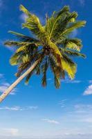 albero di cocco alla luce del giorno