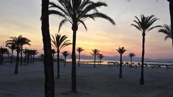 sonnenuntergang unter palmen
