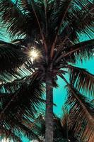palma con effetto filtro estivo retrò