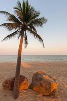 bellissima palma sulla spiaggia foto