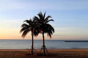 albero di cocco sulla spiaggia foto