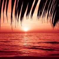 silhouette di palme sulla spiaggia tropicale al tramonto.