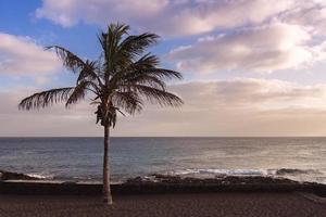 cavalla, palma