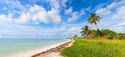 paradiso estivo tropicale con palme a florida keys, usa foto