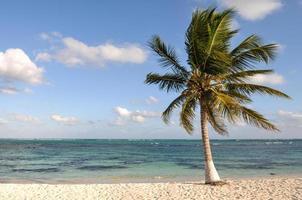 palma sulla spiaggia