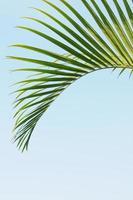 la foglia di palma verde cadente della farfalla