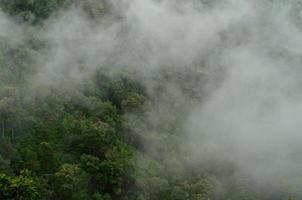 montagna nella nebbia, Chiang Mai, Tailandia