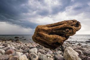 mare Baltico foto