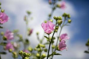 primo piano di bellissimi fiori rosa