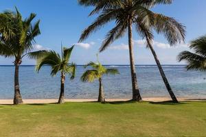linea di palma delle Fiji foto