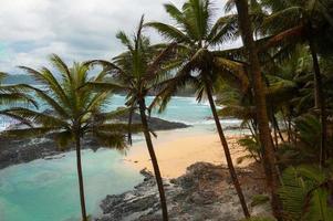 spiaggia tropicale con palme e mare blu incontaminato.