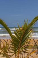 palma in spiaggia