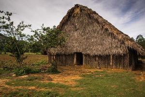 piantagione di tabacco nella valle di vinales, cuba.