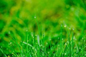piccole gocce di rugiada sull'erba foto