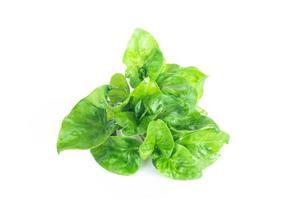 verdure biologiche di crescione fresco foto