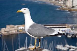 gabbiano con un porto turistico sullo sfondo foto