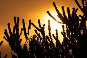 silhouette di vita vegetale all'alba