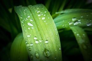 goccia d'acqua sulle foglie foto