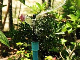 primo piano dell'irrigatore d'acqua