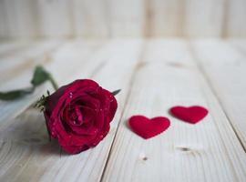 rosa rossa 3 foto