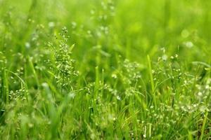 con erba acquatica