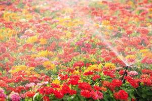 testa dell'irrigatore che innaffia il fiore