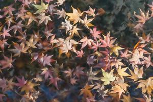 foglie di acero sfocate sulla superficie dell'acqua