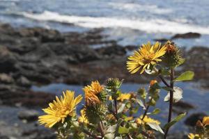 fiori di campo gialli lungo la riva