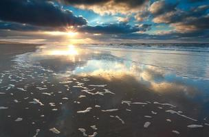 tramonto d'oro sulla costa del mare del nord