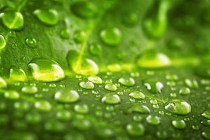 bella foglia verde con gocce d'acqua