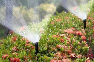 testa dell'irrigatore che innaffia il cespuglio e l'erba