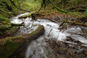 impetuoso torrente della foresta pluviale, pacifico nord-ovest