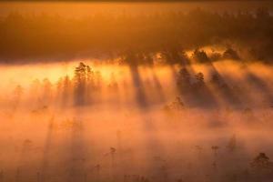 alba nella palude