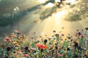 la luce del sole del mattino cade sul parco