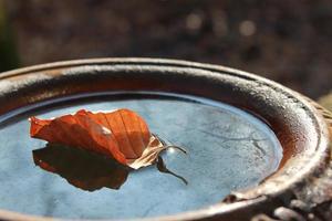 foglia d'autunno in una tazza d'acqua